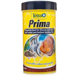 Tetra-Prima-21353