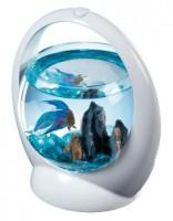 Различные аквариумные формы