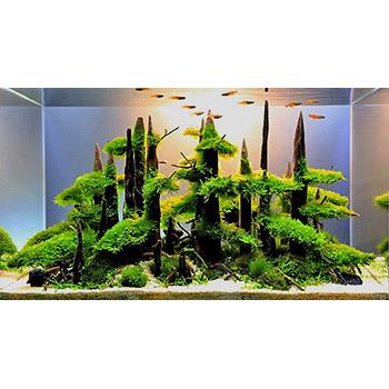 аквариум - картина подводного мира