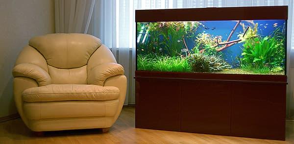 Как правильно запустить новый аквариум