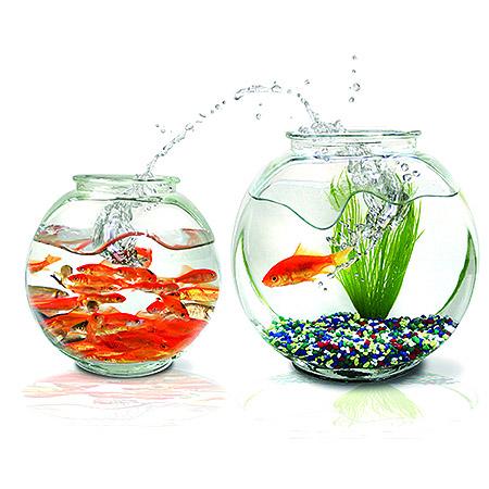 Большой аквариум всегда лучше