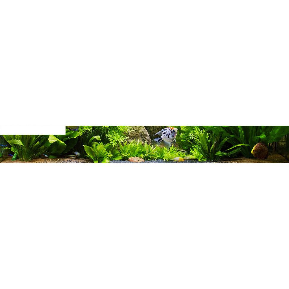 Купить панорамный аквариум по оптимальной цене