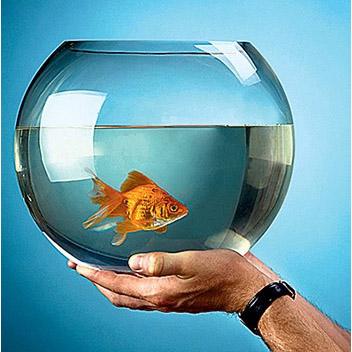 ваши рыбки