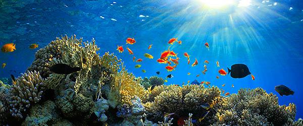 аквариум - это маленькое чудо