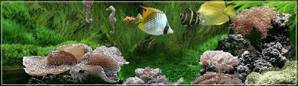 Сервисное Обслуживание аквариумов в Санкт-Петербурге