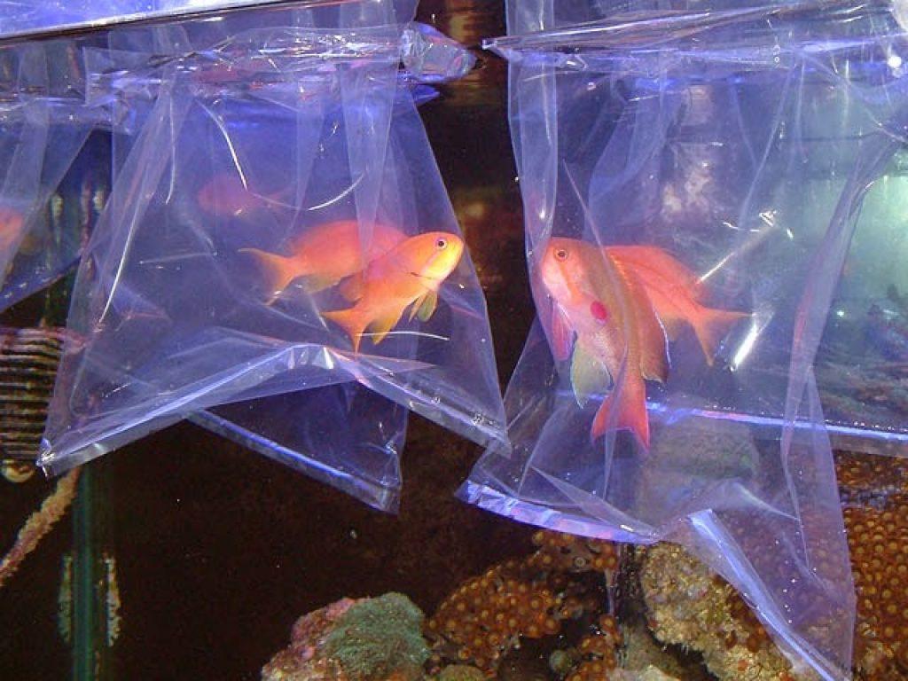 перевозка рыб в специальных резервуарах