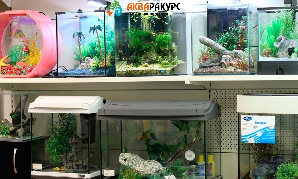 Выбираем для аквариума правильную форму