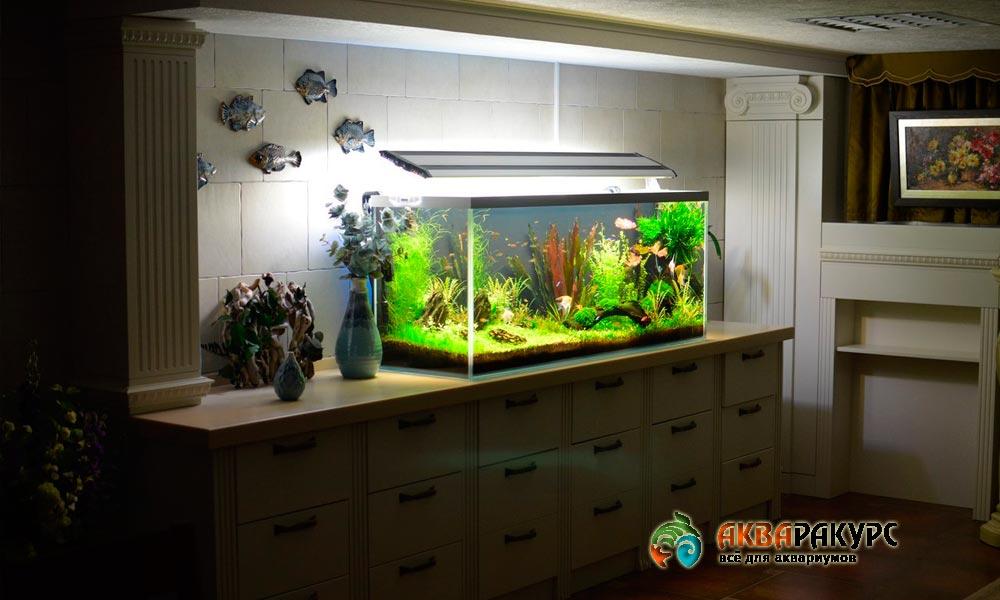 Как выбрать место для аквариума