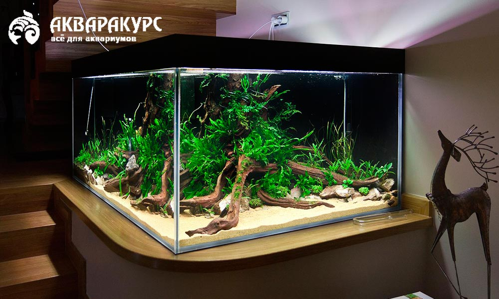Какую роль играет внешний вид аквариума