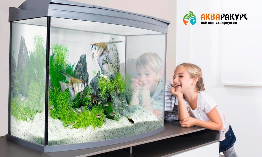 На что обращать внимание при выборе аквариума