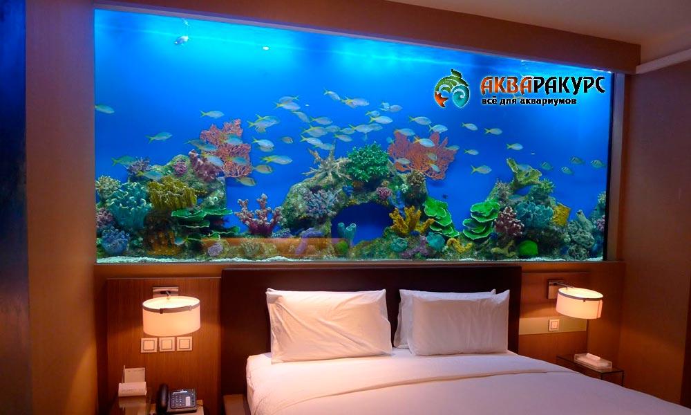 Зачем нужен аквариум в помещении?