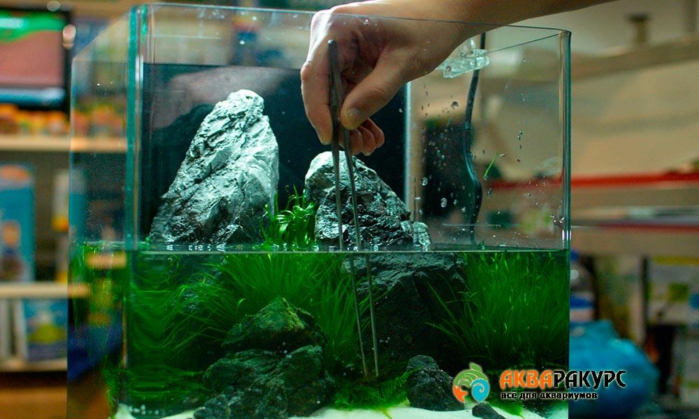 Разбираем как новичку запустить аквариум